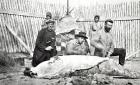 Men skinning a small beluga or large seal