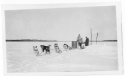 Sled dogs taking a rest with two people